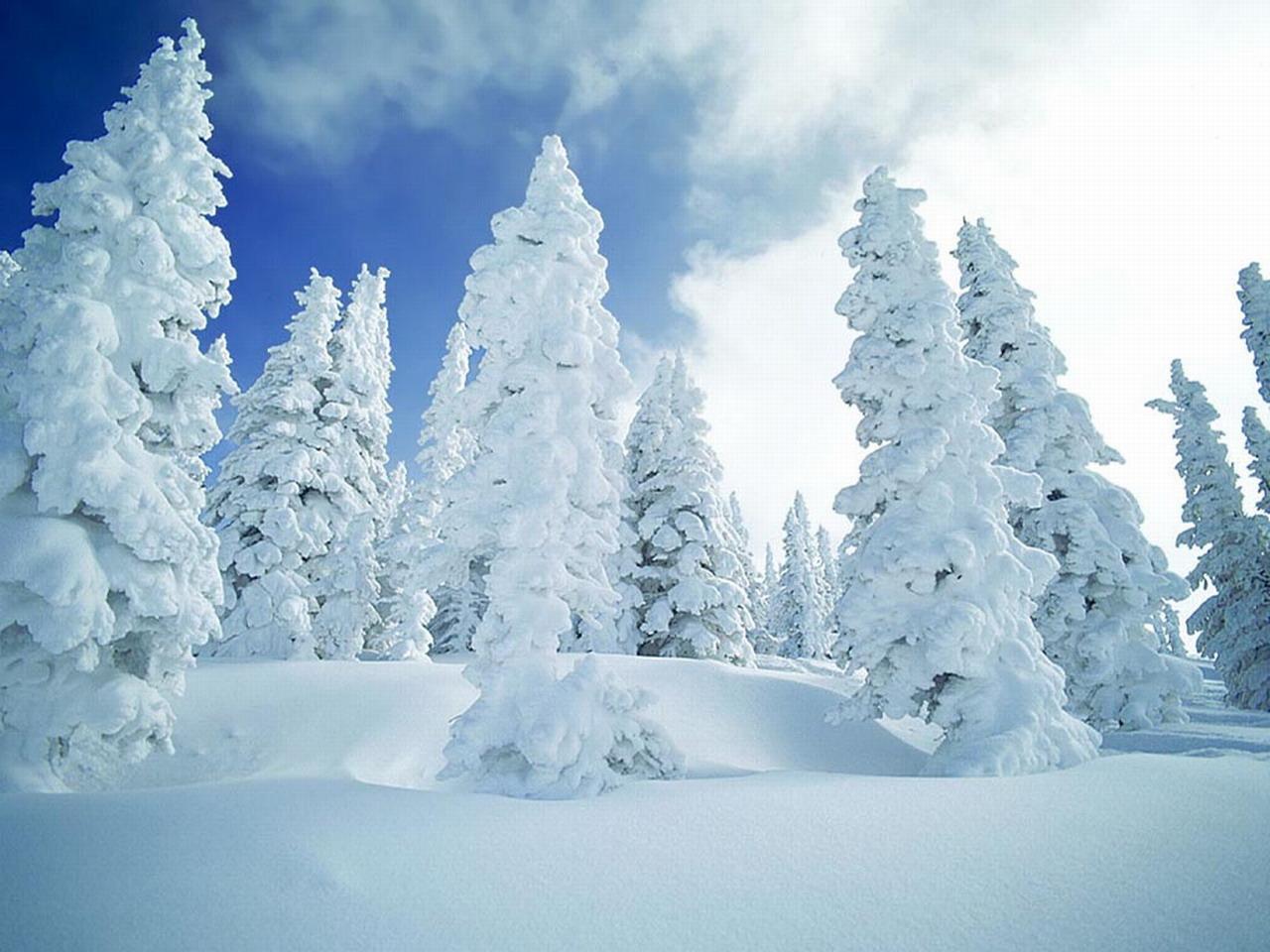 Chronique radio nergie 104 1 sur les applications mobiles pour l 39 hiver macqu bec - Couvrir arbuste pour l hiver ...